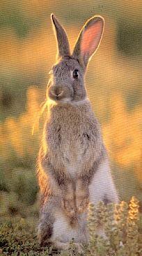 Sommaire - Cuisiner un lapin de garenne ...